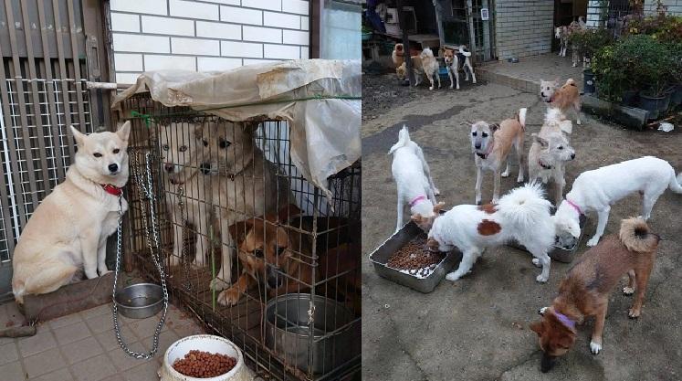 崩壊 多頭 犬 飼育